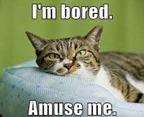bored_thumb.jpg